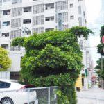 Shisa made from banyan tree