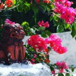 Shisa with Hibiscus