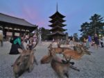 The reason why there are deer in Nara Park