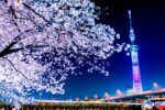 Famous places for cherry blossoms in Tokyo
